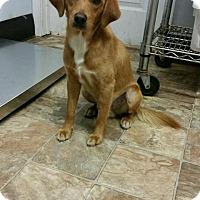 Adopt A Pet :: Tucker - Arlington, VA