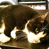 Adopt A Pet :: Dante - Hudson, NY