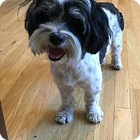 Adopt A Pet :: Terri - Tumwater, WA