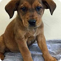 Adopt A Pet :: Templeton - Gahanna, OH