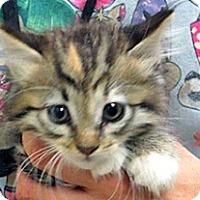 Adopt A Pet :: Beth - Wildomar, CA