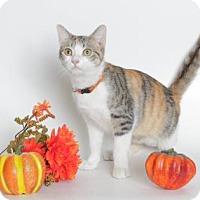 Adopt A Pet :: PURRSEPHANII - Gloucester, VA