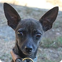 Adopt A Pet :: Bashote - Washington, DC