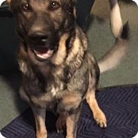 Adopt A Pet :: Zoe - Portland, ME