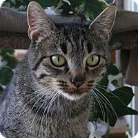 Adopt A Pet :: Joyce VALENTINE'S SPECIAL! 50% - Republic, WA