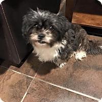 Adopt A Pet :: Bella - Tenafly, NJ