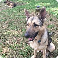 Adopt A Pet :: Bryson - Adoption Pending - Houston, TX