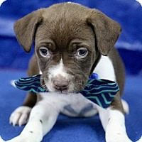 Adopt A Pet :: Dale - Picayune, MS
