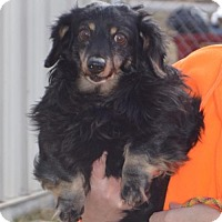 Adopt A Pet :: Snickers - Trenton, MO