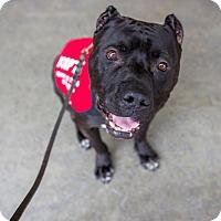 Adopt A Pet :: Hector - Newport Beach, CA