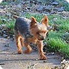 Adopt A Pet :: Dasher