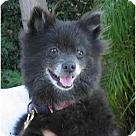 Adopt A Pet :: Coco Bean