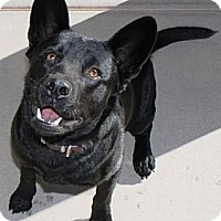 Adopt A Pet :: Mike - Gilbert, AZ