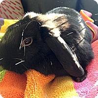 Adopt A Pet :: Mandy - Portland, ME