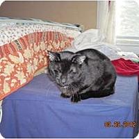 Adopt A Pet :: Felix - Riverside, RI