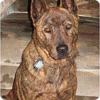 Adopt A Pet :: Malaika (Laika) - Southern California, CA