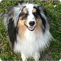 Adopt A Pet :: Scrappy - Orlando, FL