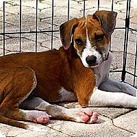 Adopt A Pet :: Dudley - Miami, FL