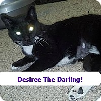 Adopt A Pet :: DESIREE FIV+ abused 25.00 - Rochester, NY