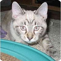 Adopt A Pet :: Garfield kitten - Cincinnati, OH