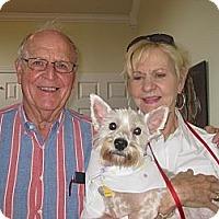 Adopt A Pet :: Blair Adopted - Carrollton, TX