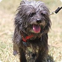 Adopt A Pet :: Brutus - Winters, CA