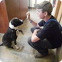 Adopt A Pet :: Mr. B - Sheridan, OR
