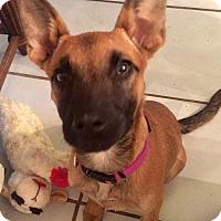 Adopt A Pet :: MINKA - CHICAGO, IL