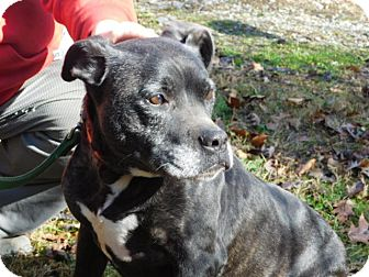 Boxer/Terrier (Unknown Type, Medium) Mix Dog for adoption in Millerstown, Pennsylvania - WINIFRED