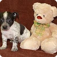 Adopt A Pet :: Storage Closet - Salem, NH