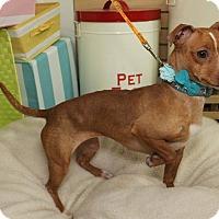 Adopt A Pet :: Penny - Detroit, MI