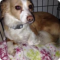 Adopt A Pet :: Moe - Gig Harbor, WA