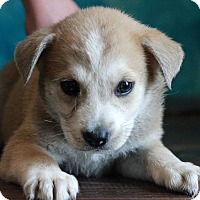 Adopt A Pet :: Janet - Waldorf, MD