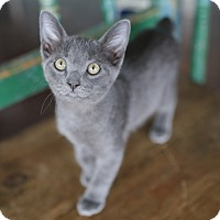 Adopt A Pet :: Brewster - San Antonio, TX