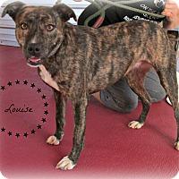 Adopt A Pet :: Louise - Eden, NC