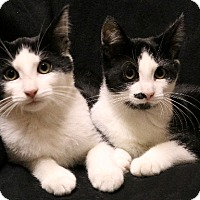 Adopt A Pet :: Scott and Stacy - Rochester, NY