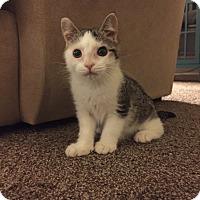 Adopt A Pet :: Matilda - Carlisle, PA