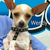 Chihuahua Mix Dog for adoption in Encinitas (San Diego), California - Wendy