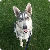 Adopt A Pet :: Zola - Alpharetta, GA