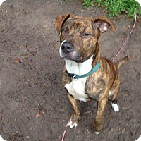 Adopt A Pet :: McCoy - Groveland, FL
