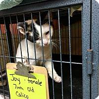 Adopt A Pet :: Joy - Dickson, TN