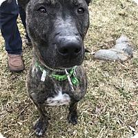 Adopt A Pet :: Zeus - Sparta, NJ