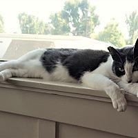 Adopt A Pet :: Rita - Monrovia, CA
