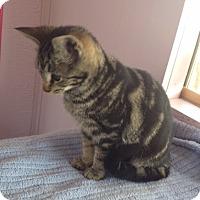 Adopt A Pet :: Milly - Crestview, FL