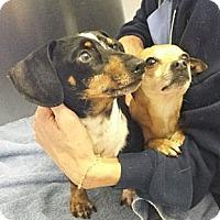 Adopt A Pet :: Jimmy&Jasper- DISCOUNT ON PAIR - Allentown, PA