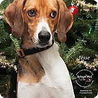 Adopt A Pet :: Jesse - Westfield, NY