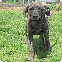 Adopt A Pet :: Flower - Linden, TN