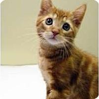 Adopt A Pet :: Bumble - Chicago, IL