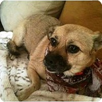 Adopt A Pet :: Penny - Rancho Mirage, CA