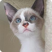 Adopt A Pet :: Phoebe - Irvine, CA